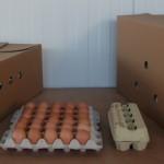 Auswahl Verpackungsmöglichkeiten Eier (1)