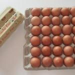 Auswahl Verpackungsmöglichkeiten Eier (2)